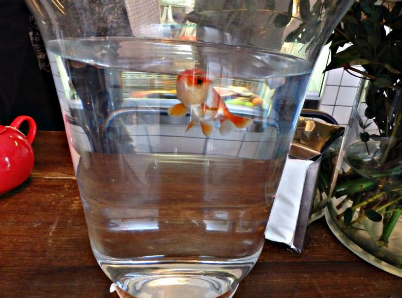 cafe-pimpin_paris_goldfish
